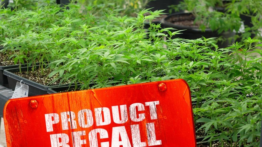Licensed Producer Cannabis Recall